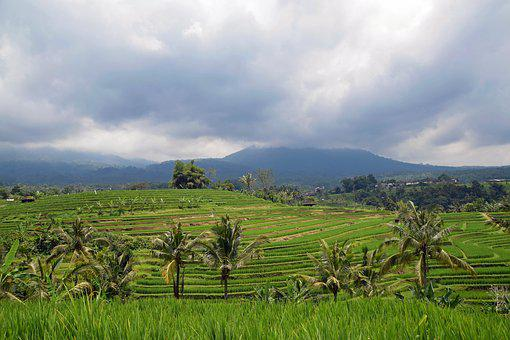 Bali, Indonesia, Travel, Rice Terraces, Panorama