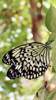 Butterfly, Animals, Nature, Insect, Wings, Spring