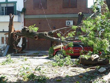 Twister, Storm, Hurricane, Winds, Nature, Tree, Fallen