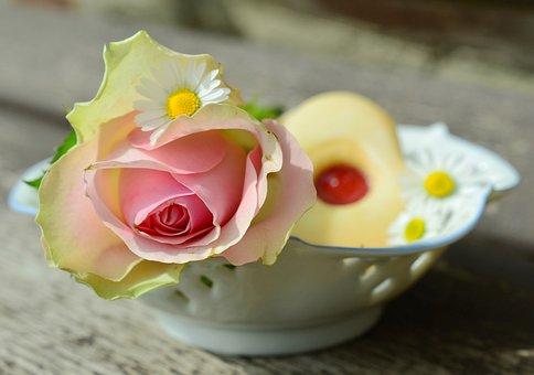Rose, Blossom, Bloom, Pink, Romantic, Porcelain, Tender