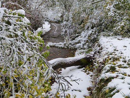 Forest, Damage, Winter, Wintry, Snow, Frost, Forward