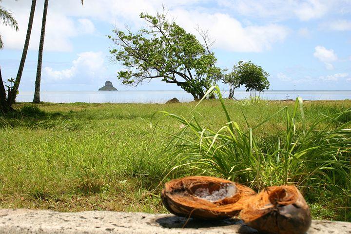 Hawaii, Island, Beach, Coconut, Palm Trees, Holiday