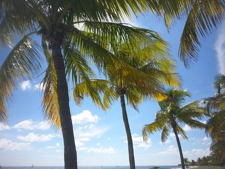 Palm Tree, Tropical, Key West, Paradise, Ocean, Sea