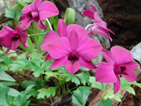 Flower, Fuchsia, Nature, Gran Canaria, Flora, Summer