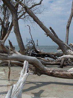 Water, Ocean, Beach, Folly Beach, Driftwood, Lighthouse