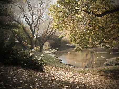 Central, Part, New, York, Bridge, Autumn, Fall, Leaves