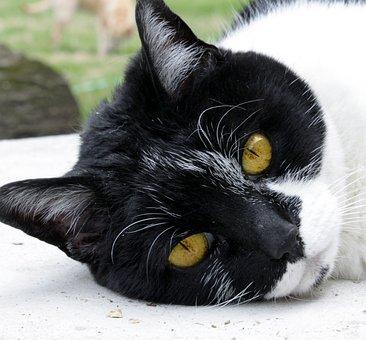 Cat, Pet, Domestic, Black, Rescue, Portrait, Old, White
