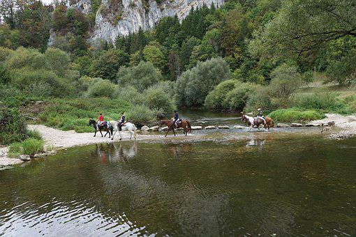 Horses, Danube, Water, Ride, Sport, Cross