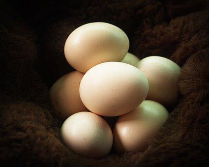 Egg, Fresh, Cholesterol, Farm, Kitchen, Brown, Food