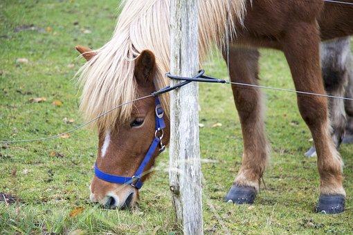 Horse, Pasture, Coupling, Graze, Meadow, Wild Horse