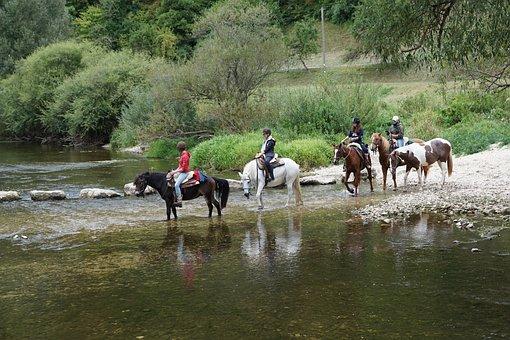 Horse, Water, Animal, Danube, River, Ride, Fridingen
