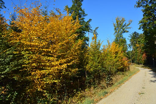 Forest, Autumn, Colors, Foliage, Wood, Nature, Trees