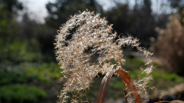 Spring, Reed, Dry, Backlight