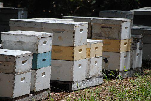 Beehives, Honeybee, Bee, Hive