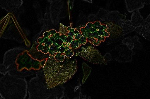 Flower, Neon, Blossom, Bloom, Color, Neon Orange