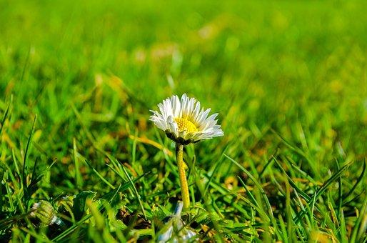 Grass, Sunlight, Meadow, Green, Floral, Spring, Flower