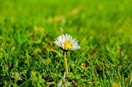 Grass, Sunlight, Meadow, Green, Floral, Spring, Flower