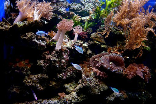 Coral Reef, Fish, Coral, Water, Stones, Plant, Animals