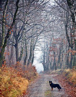 Forest, Dog, Spacer, Friend, Way, Autumn, Loneliness