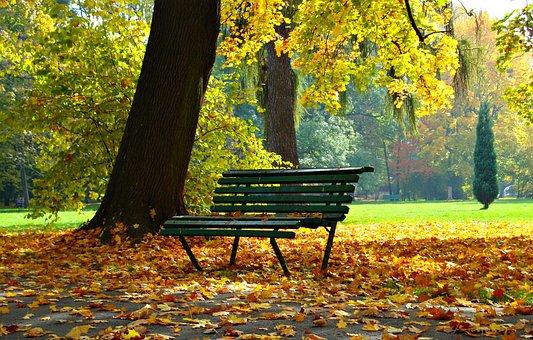 Autumn, Park, Foliage, Autumn Gold, Landscape