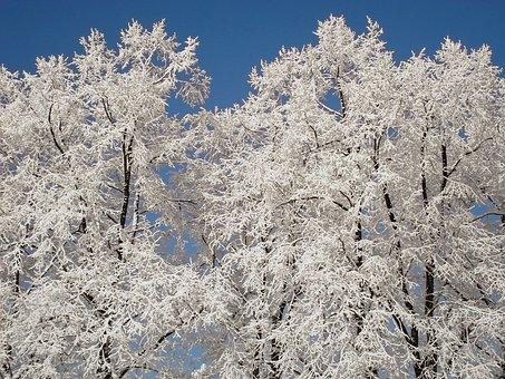 New Zealand, Winter, Tree, Snow, Snowed In, Aesthetic