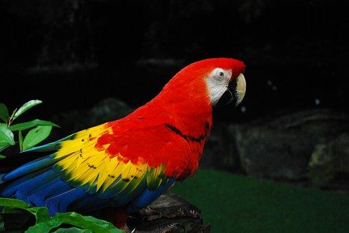 Parrot, Jurong Bird Park, Singapore, Bird, Fly, Wings