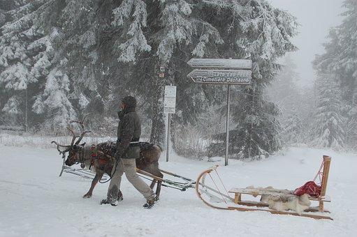 Reindeer, Sled, Snow, Winter