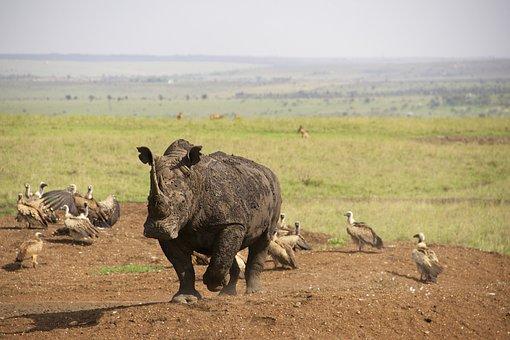 Rhino, Kenya, Nairobi National Park, Safari