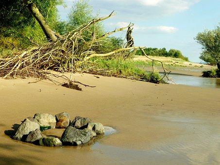 Elbstrand Same, Tree Roots, Elbe, Bank