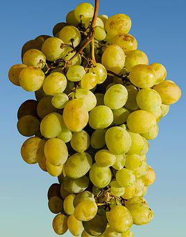 Grapes, Fruit, Winegrowing, Wine, Green, Green Grapes