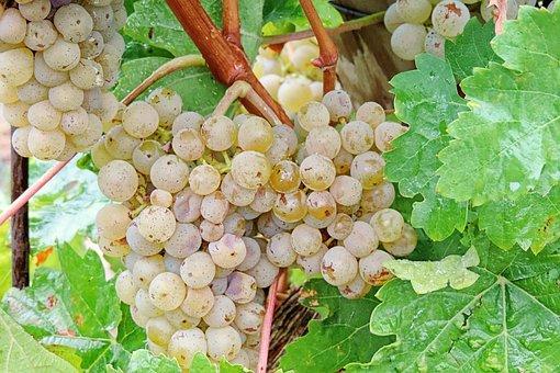 Grapes, Raindrop, Green Grapes, Beady, Green