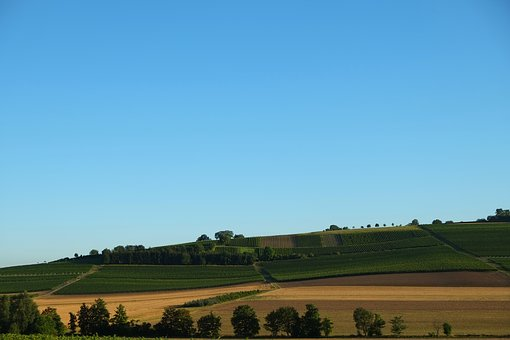Rheinhessen, Landscape, Winegrowing, Nature, Vines