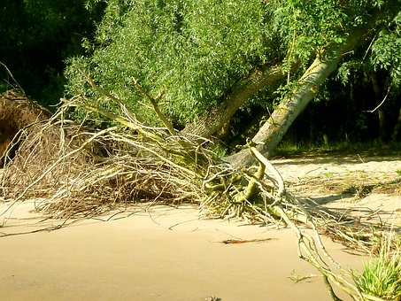 Elbe Beach, Walk On The Beach, Tree, Uprooted, Root