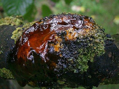 Resin, Bitumen, Tree, Wood, Bark, Log, Tribe, Branch