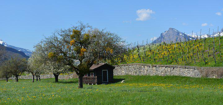 Landscape, Vineyards, Vineyard, Nature, Mountain