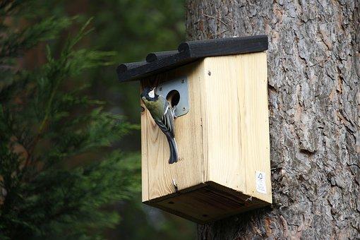 Tit, Aviary, Feed, Wood, Nature, Bird, Plumage