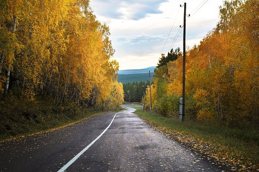 Forest, Autumn, Road, Asphalt, Wet, Rain, Sun, Sky