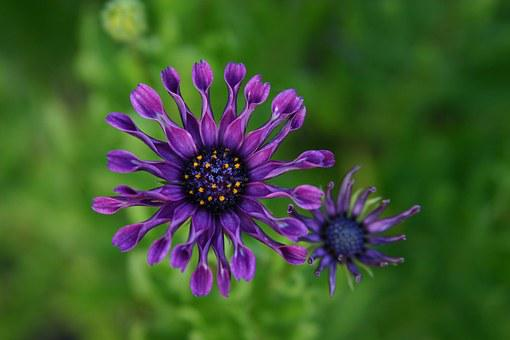 Purple, Flower, Wildfower, Nature, Floral