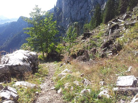 Switzerland, Simmental, Walop, Trail, Lothar