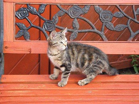 Cat, Kitten, Tabby, Bench, Pets, Cute, Animals