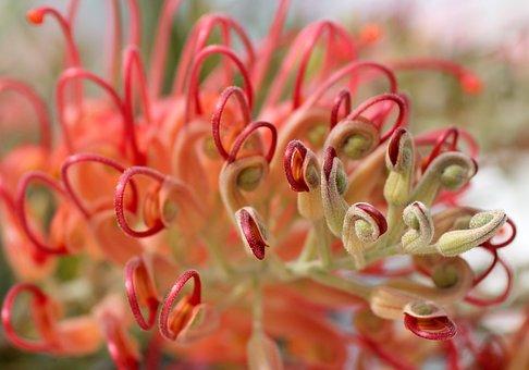 Lipari, Blossom, Bloom, Pink, Nature, Colorful