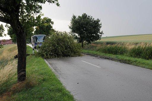 Storm, Forward, Climatology, Dangerous, Dramatic, Tree