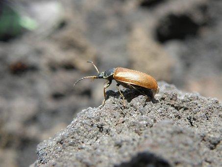 Beetle, Detail, Elytra, Stone