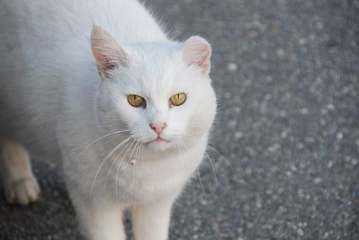 Cat, White, View, Fight Trails