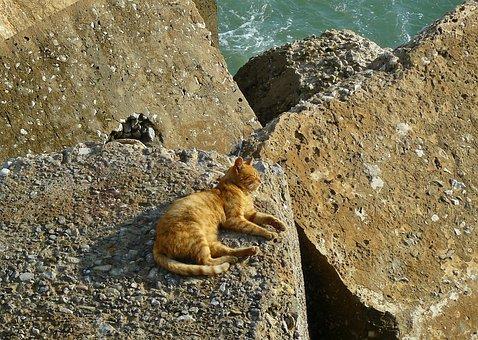 Cat, Animal, Pet, Animal World, Mammal, Tiger Cat