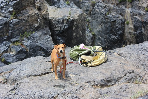 Dog, Hiking, Rocks, Ensenada, The Jump, Pet, Animal