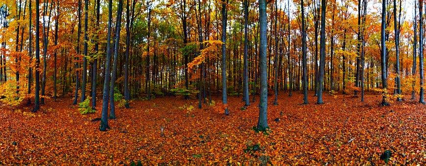 Forest, Autumn, Foliage, Nature, Autumn Gold