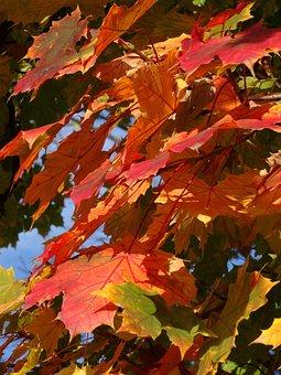 Foliage, Autumn, Autumn Gold, Collapse, Color, Nature