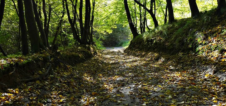 Way, Forest, The Road In The Forest, Autumn, Foliage