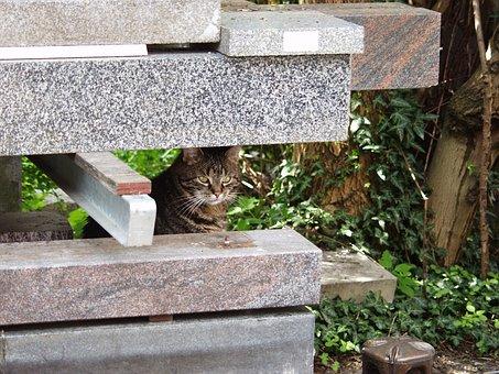 Tomcat In Free, Tombstone, Hidden, Sun, Streunern